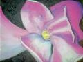 Tucson_flower 1 Index-1014