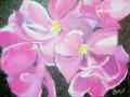 Tucson_flower 2 Index-1015