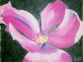Tucson_flower 3 Index-1016