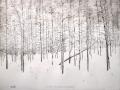 Snow Covered Aspen Grove