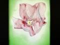 Tucson_pink_flower_Index-1045